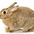 Stock Photo: Cute easter rabbit