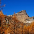 Autumn trees on mountain - Stock Photo