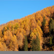 Autumn trees in forest - Stock Photo