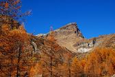 Autumn trees on mountain — Stock Photo
