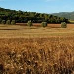 Tuscany landscape — Stock Photo #1341284