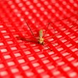 Dead mosquito — Stock Photo