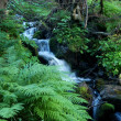 Stock Photo: Brook in forest