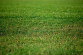 Football green field — Stock Photo