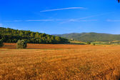 Panoramic view of a wheat field — Stock Photo