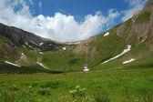 Summer High Mountain pasture — Stock Photo
