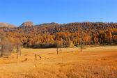 Scenery autumnal mountain landscape — Stock Photo