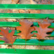 Stock Photo: Three brown dead leaves on bench