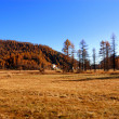 Autumnal golden meadow and hillls — Stock Photo