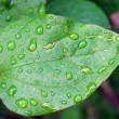 Leaf with dew — Stock Photo #1344552