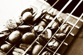 Cocoa beans on strings from a guitar — Stock Photo