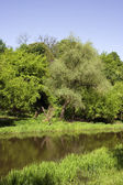 The river has spring landscape — Stock Photo