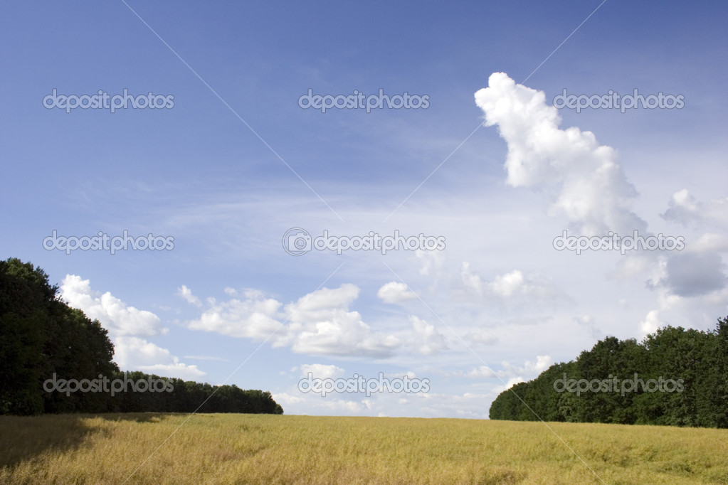 Rural landscape. Yellow field among the forest.  Stock Photo #1354129