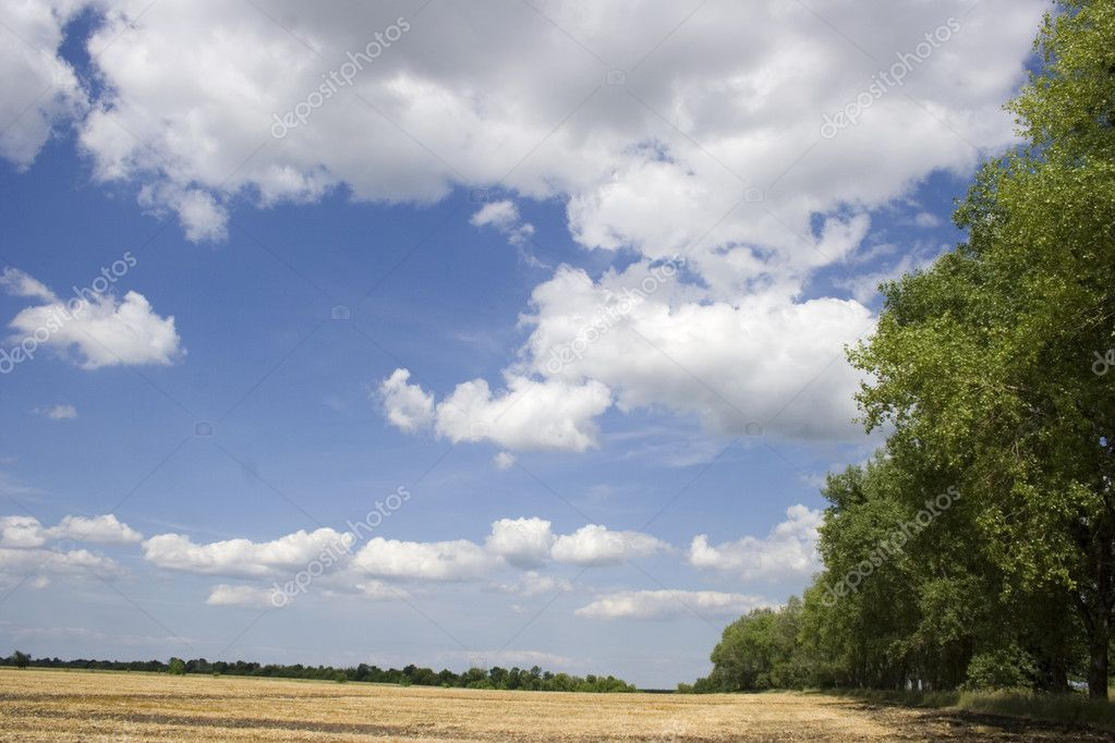 The summer landscape is above the field after the forest. — Stock Photo #1354619
