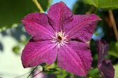 Fleurs de tressage — Photo
