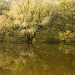 Autumn landscape — Stock Photo #1453525