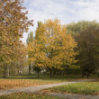 The autumn landscape is in a park in tow — Stock Photo