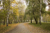 Park paths are covered the yellow leave — Stock Photo