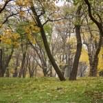 Autumn landscape — Stock Photo #1464052