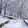 A park road is among trees and snow. — Stock Photo