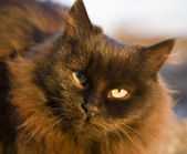 A black home lady-cat — Stock Photo