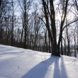 Winter landscape — Stock Photo #1472023