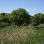 Spring landscape — Stock Photo #1475441
