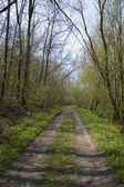 Forest road — Stock Photo