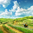 Cow on a summer meadow — Stock Photo