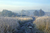 Hoarfrost on a grass — Stock Photo