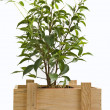Royalty-Free Stock Photo: Plant in a box