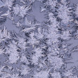 Frost patterns — Stock Photo