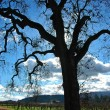 California wine country — Stock Photo