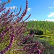 California wine country - Lizenzfreies Foto