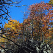 White Oak Canyon — Stock Photo