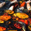 Feeding Frenzy — Stock Photo