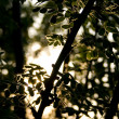 Branch in sun beams — Stock Photo #1340123