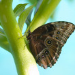 Butterfly on stem — Stock Photo