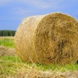 Rolled hay on meadow - Stock Photo