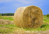 Rolled hay on meadow — Stock Photo