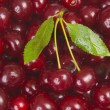 Sweet cherries — Stock Photo #1707590
