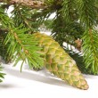 Fir cones — Stock Photo #1771183