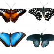 Four butterflies — Stock Photo