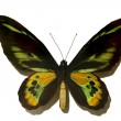 Black with green butterfly — Stock Photo #1775412