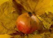 Garnet on maple leaves — Stock Photo