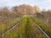 Old railroad track — Stock Photo