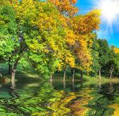 Moře stromy — Stock fotografie