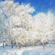 Стоковое фото: Magical winter woods covered with fresh
