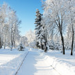 Stockfoto: Magical winter woods covered with fresh
