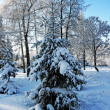 Magical winter woods covered with fresh — Stockfoto